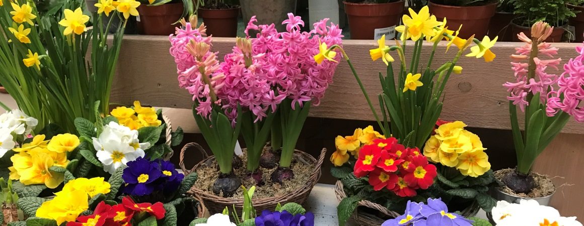 Mothers Day flowers, plants and gifts available from Rowan Garden Centre, Chalfont St Giles, Buckinghamshire